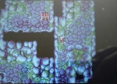 飛竜の洞窟内部