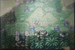 洞窟内に植物